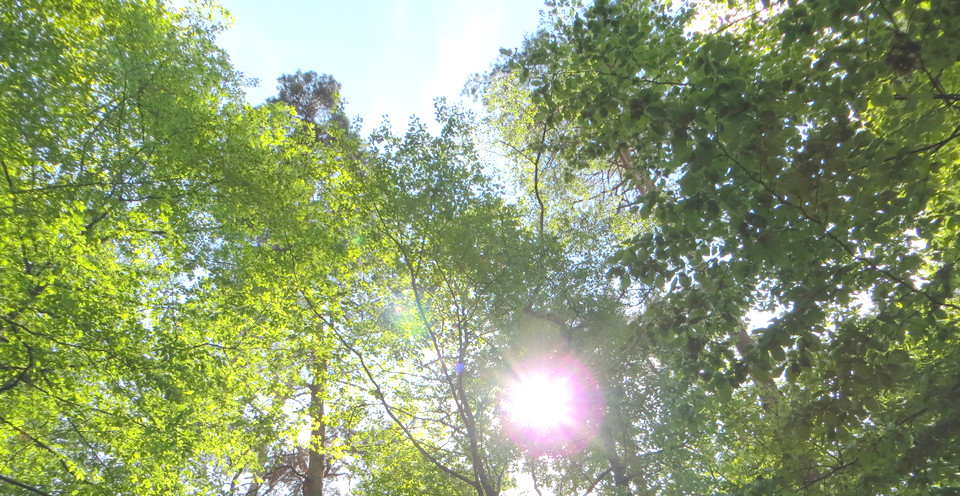 BossImKopf--Luschas-Stress-vorbeugen-Entspannungs-Protokoll